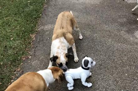 Tony and dogs